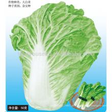 CC05 SD No.5 cedo maduro repolho chinês, sementes de repolho chinês híbrido