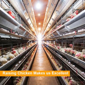 Ein Typ / H Typ Hühnerkäfig zum Verkauf in den Philippinen