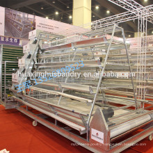 belt conveyor system used for Philippines chicken house