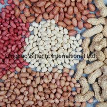Crop Peanut Kernels 24/28, 28/32