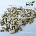 Nouvelle graine de tournesol vendue avec la meilleure qualité