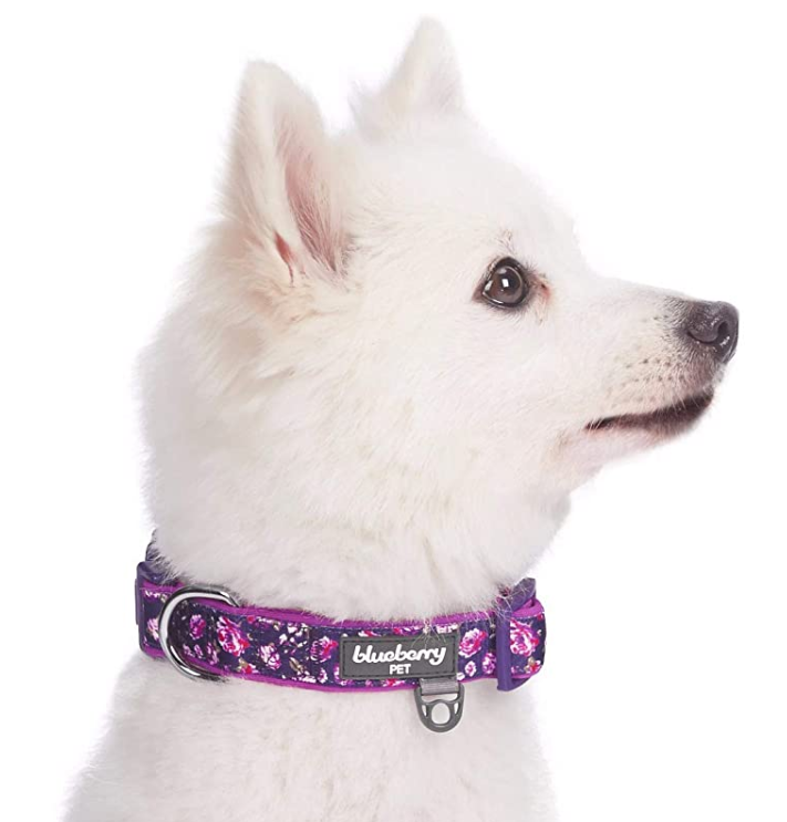 Padded Pet Collars