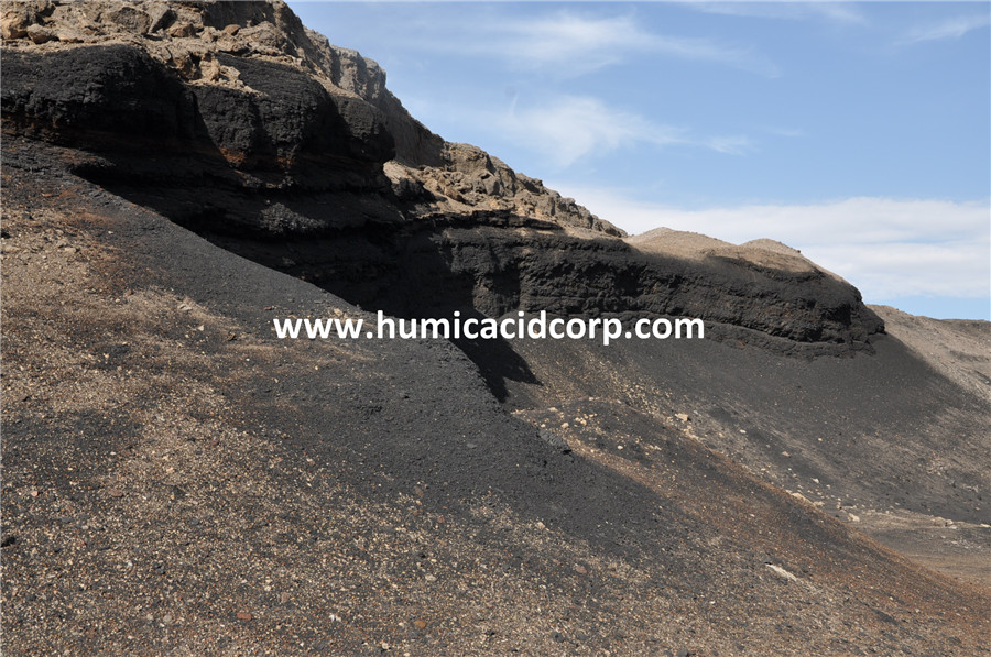 Leonardite humic acid mine