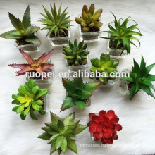 Wholesale Bonsai Succulent Plant With Glass Pot