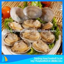 Köstliche, gefrorene, kurzhalsige Muschel, die bereit ist, gefrorene, kurzhalsige Muschel zu essen