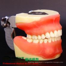 DENTAL26 (12608) Modèles complets de pratique de la chirurgie dentaire