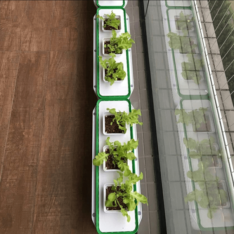 lndoor Automatic hydroponics for plant