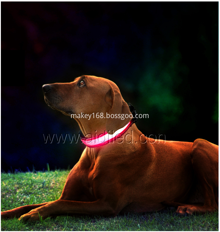 Led Collars For Small Dogs