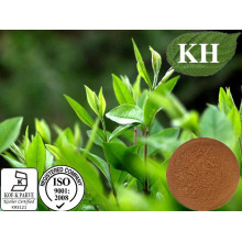 Anti-Cancer Green Tea Extract 20%, 30% L-Theanine