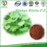Best selling Ginkgo Biloba P.E. 24/6 - Ginkgolides from GMP workshop