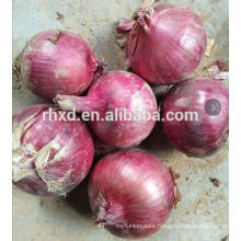 2017 new crop harvest fresh red onion