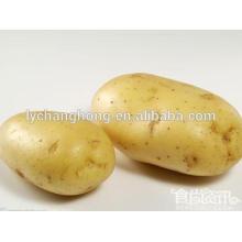 2014 new crop sweet seed potatos on hot sale (80-150g, 100-200g, 200g up)
