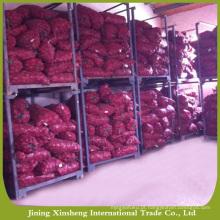 Preço de mercado da cebola vermelha