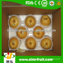 Chinese Fengshui Pear fresh fruit names of all dry fruits of 2014
