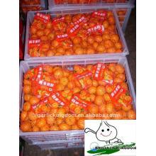 3.5-5.5cm Bébé Mandarin
