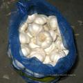 Exportar buena calidad Fresh Chinese Mesh Bag Embalaje Pure White Garlic