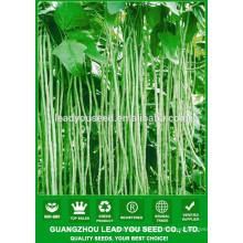 Fournisseur de graines de haricot à haut rendement NBE05 Chonwu, nom des graines