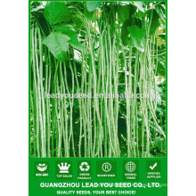 NBE05 Chonwu high yield bean seeds supplier,name of seeds