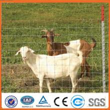 Bouche de chèvre / ferme / terrain de boucherie supérieure prix de vente chauds