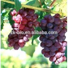 Extrato de alimentos de alta qualidade extrato de semente de uva softge ltablet