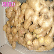 Chinese air dried ginger market prices for fresh ginger
