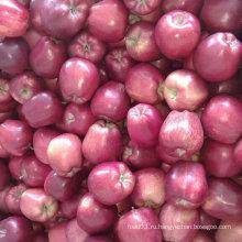 Новая обрезка китайского свежего красного яблока Хуаниу