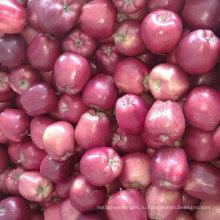 Новый Урожай Китайский Свежий Красный Huaniu Яблоко