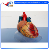 High Quality Anatomical Human Heart Model & Detachable Heart Antaomical Model