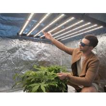Bandes LED Light 640w utilisées pour les graines de légumes