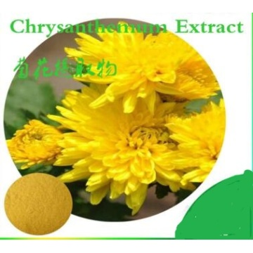 Organic Chrysanthemum Flower Extract