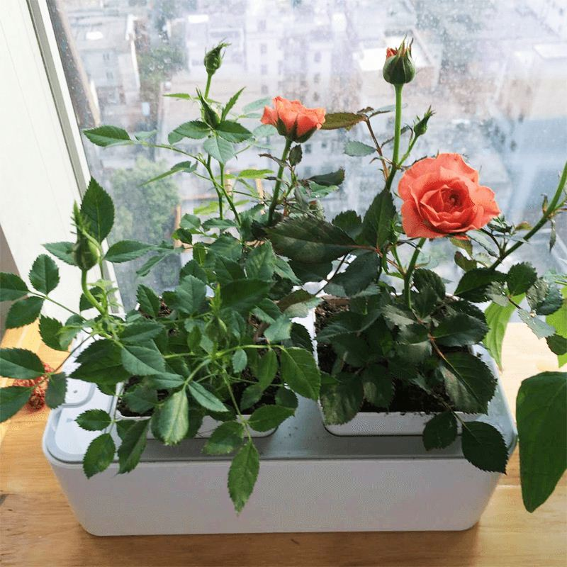 Mini DIY Hydroponic Flower Net Pot Grow System
