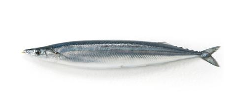 New Season Pacific Saury for Sale