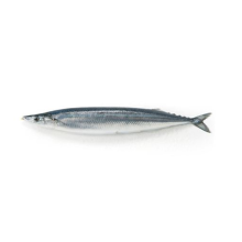Round Whole Fresh Pacific Saury