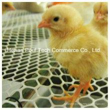 Клетка для цыплят-расплода для куриной фермы