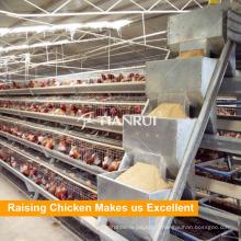 Équipement automatique de haute qualité d'alimentation de volaille de conception de Tianrui pour le poulet