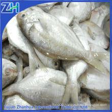Raw materials frozen butterfish chinese pomfret