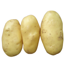 2015 neue Ernte frische Kartoffel (150g und höher)