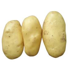 Batata Fresca de 2015 Novas Colheitas (150g ou mais)