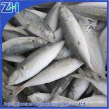 horse mackerel fish, big eye mackerel fish, Japanese horse mackerel