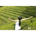 Chá verde barato do preço