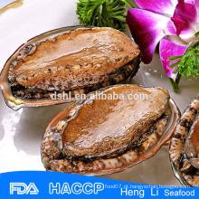 Alta qualidade fujian abalone