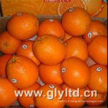 Nouvel an chinois à base de Navel Orange