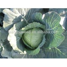 NC05 Lianna rodada sementes de repolho guangzhou diferentes tipos de sementes manufactory
