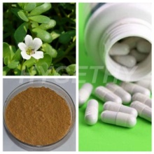 Bacopa Monnieri Extract Capsules