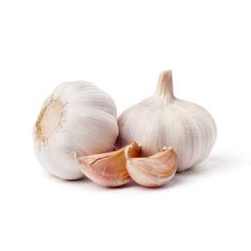 Natural fresh garlic white