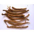 Natural Baicalin 83% 95% Scutellaria Baicalensis Extrait