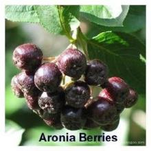 Poudre naturelle d'extrait de chokeberry CAS: 18466-51-8
