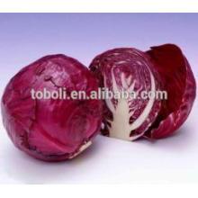 Высококачественная китайская красная капуста