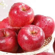 Chinesischer Qualitäts-roter Stern-Apfel