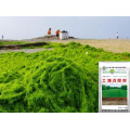 Seaweed extract Microbial base organic bio manure for soil conditioner